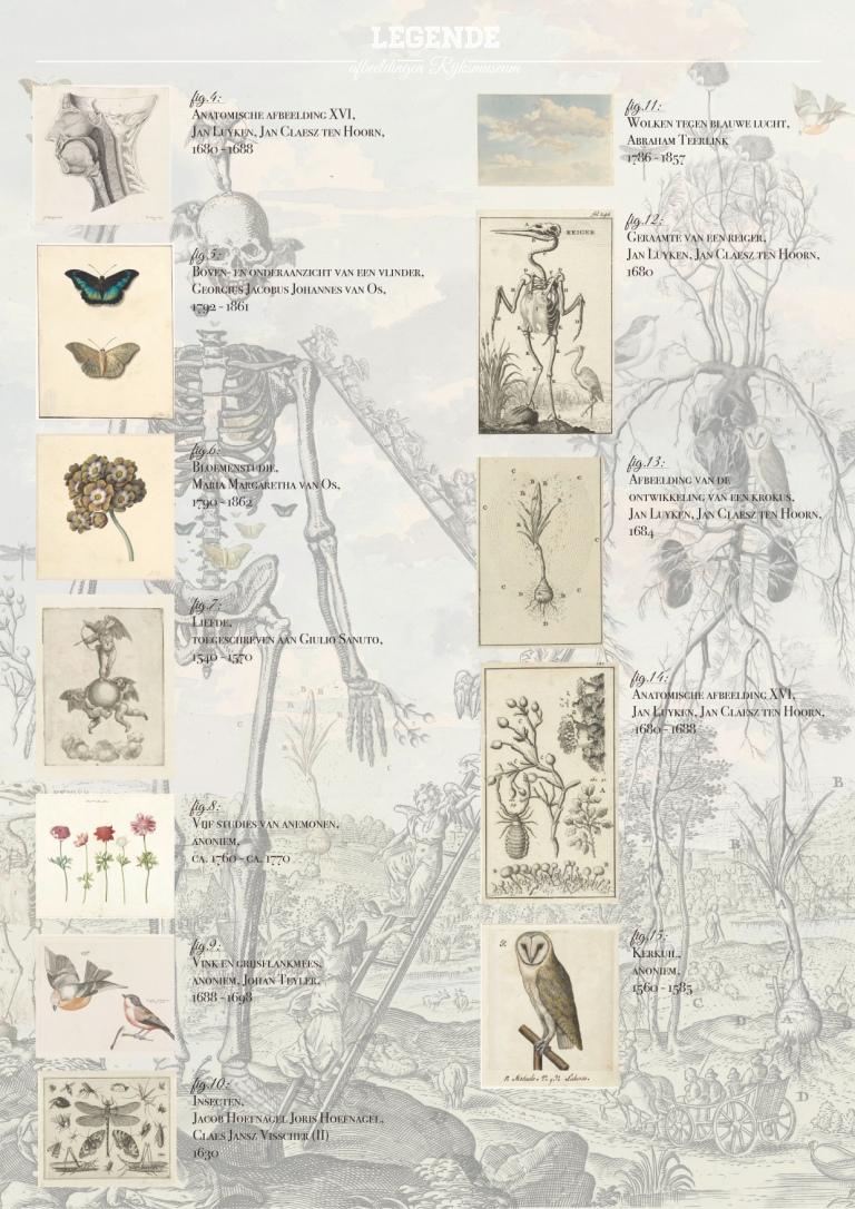 Rijksmuseum-Anatomie_van_de_droom-Floris_Van_Opstal_-5